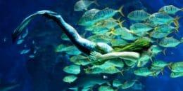 havfruenkarin